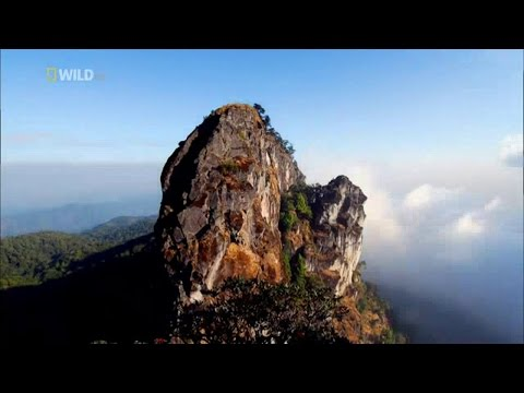 Wild Thailand HD (Nature Documentaire HD)