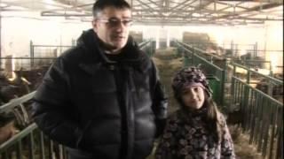Prica o najvecoj farmi koza u Srbiji i novom nacinu odgoja jarica
