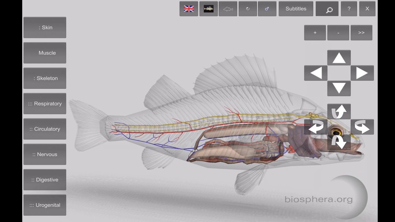 3D Fish Anatomy App for Mobile Devices - YouTube
