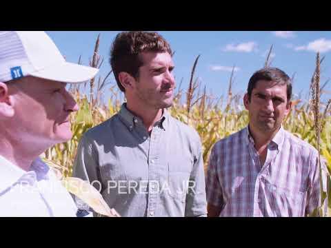 Organics in Argentina