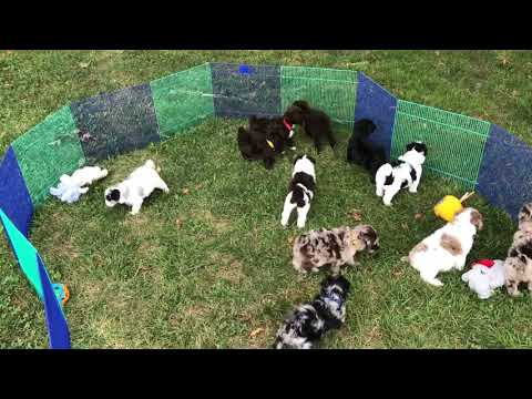 Crystals mid-size schnoodles 8-16-19