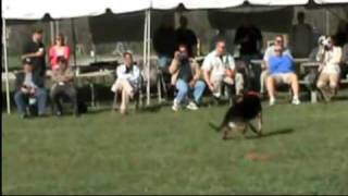 Sit Means Sit - Alpharetta Dog Training & Obedience School