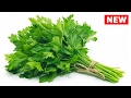 10 Unbelievable Reasons You Should Eat PARSLEY Every day!