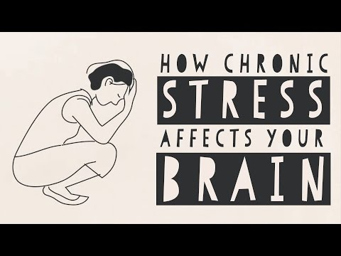 How Stress affect the Brain