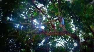 Berburu rambutan di 2 juta pohon