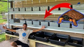 CRAZIEST BABY TURTLE RACK SYSTEM EVER ON THE RANCH!