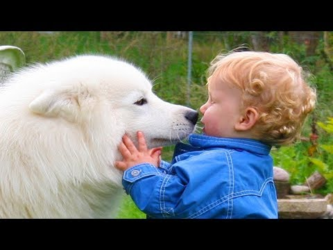 Dog loves Baby | Dogs and Babies Grow Up Together To Be Inseparable Friends