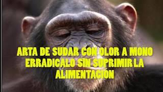 ARTA DE SUDAR CON OLOR A MONO ERRADICALO SIN SUPRIMIR LA ALIMENTACIÓN