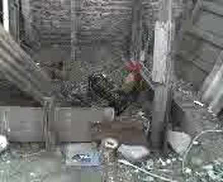 Нух пайгамбар кемеси кино фото 531-727