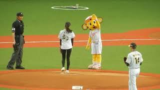 ABCテレビで放送中の虎バンのアシスタントに就任した 津田理帆さんの始...