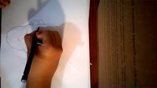WP 20180223 18 40 36 Pro(Gustavo braga)como desenhar o nappa