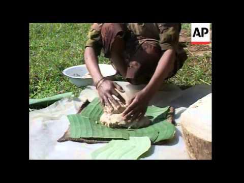 False banana plants produce no fruit but can be a good source of food