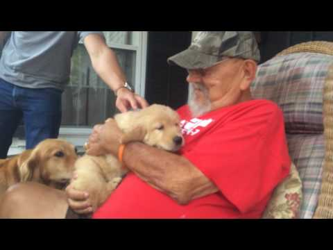 Surprising my Dad with a Golden Retriever Puppy