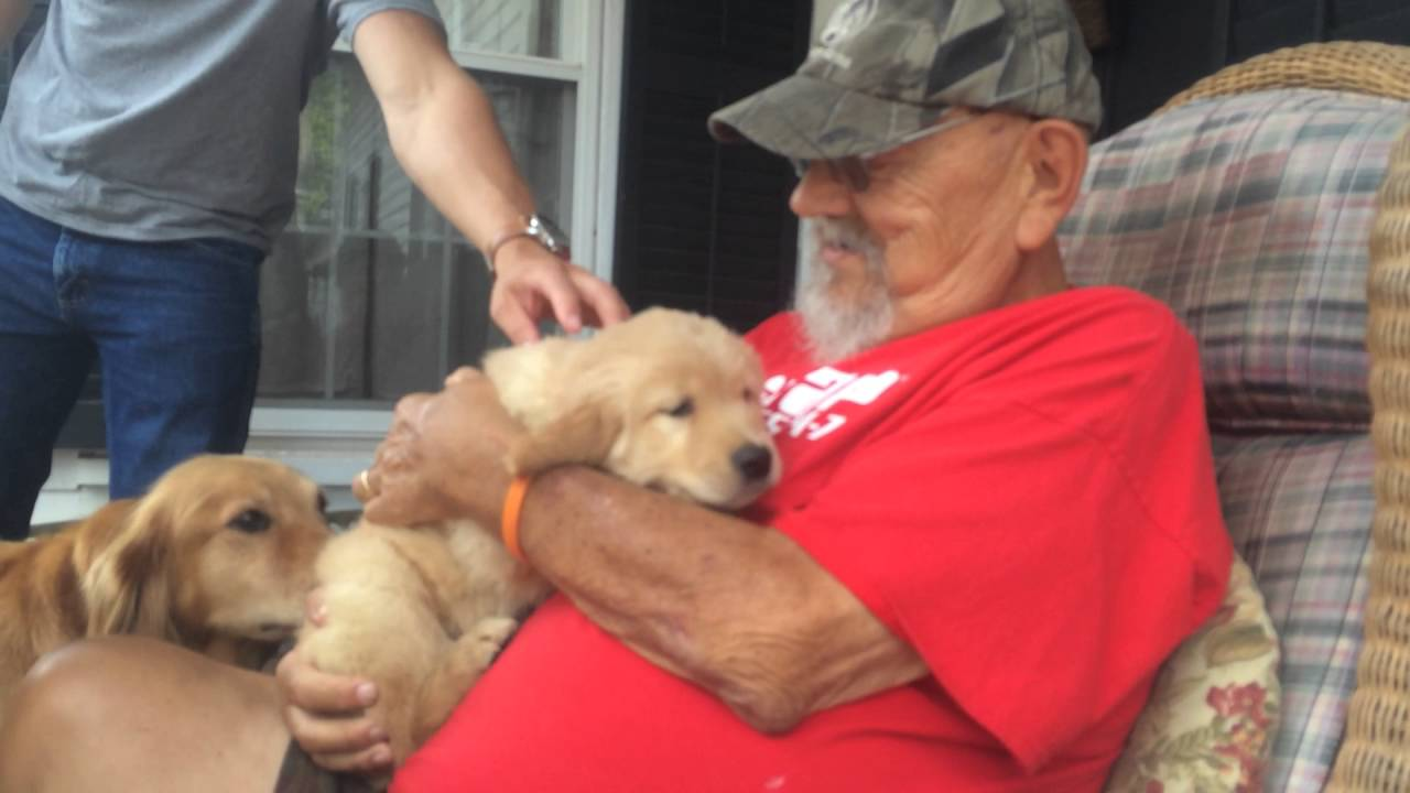 7365099abc359 Surprising my Dad with a Golden Retriever Puppy - YouTube
