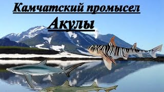 Русская рыбалка 3.99. Квест камчатский промысел. Акулы