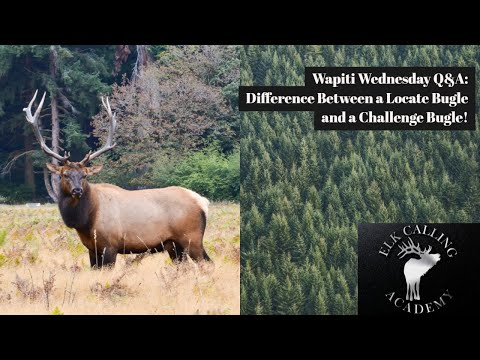 Difference Between Locate & Challenge Bugle? | Wapiti Wednesday Q&A - Episode 16