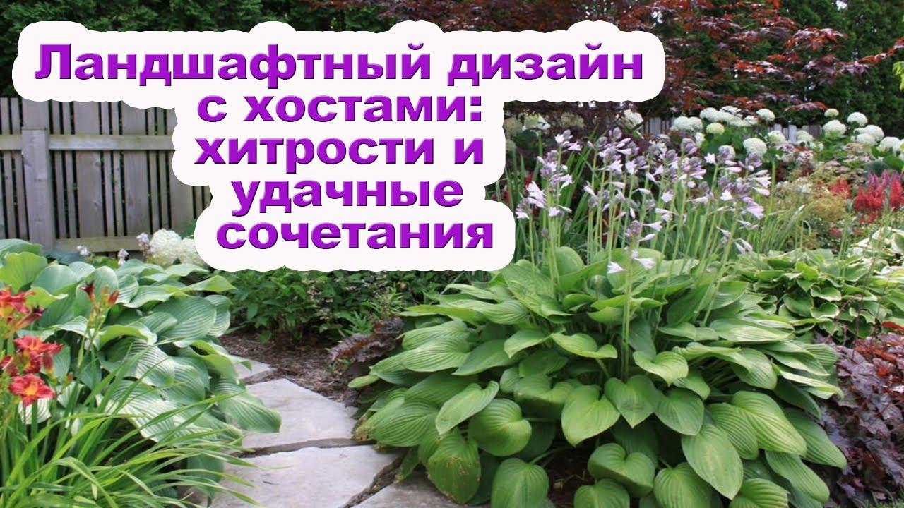 Хоста в саду [ Как красиво разместить хосты на участке ]