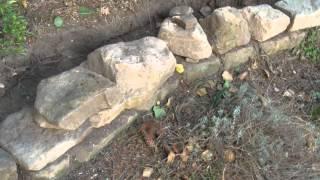 Baixar Trockenmauer