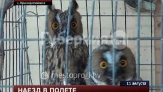Жить будет, летать – нет: орнитолог поставил диагноз сове. MestoproTV