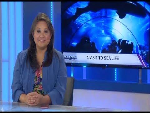 EAGLE NEWS INTERNATIONAL (AUGUST 26, 2017)
