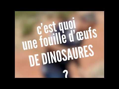C'est quoi une fouille d'oeufs de dinosaures ?