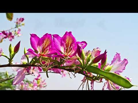 4K HDR Video – Wonderful Flower Wallpaper   No Music
