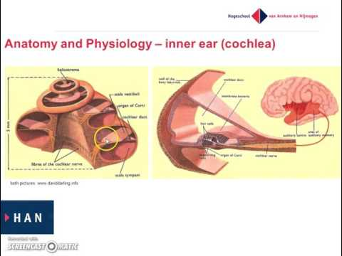 Anatomy and Physiology of the inner ear