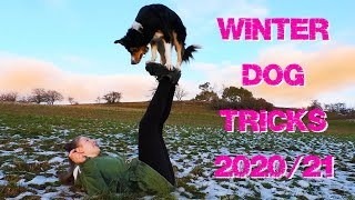 Winter Dog Tricks & Fun mit Jane & Lee