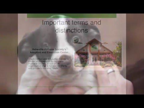 Asheville Humane Society -- Foster Program 2016