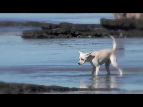 Dog Beach Del Mar California