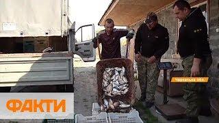 Спокойствие рыбе, ни единого шанса браконьерам: как в Черкасской области ловят преступников