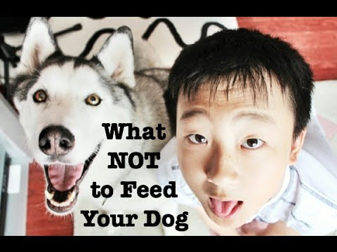 What Not to Feed Your Dog