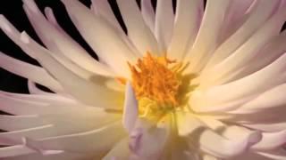 Красивое видео для релаксации. Цветы. Природа.(, 2015-07-29T16:17:17.000Z)