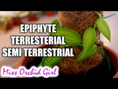 Epiphyte, terrestrial and semi terrestrial Orchids