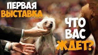 Первая выставка вашей собаки. Что вас ждет?