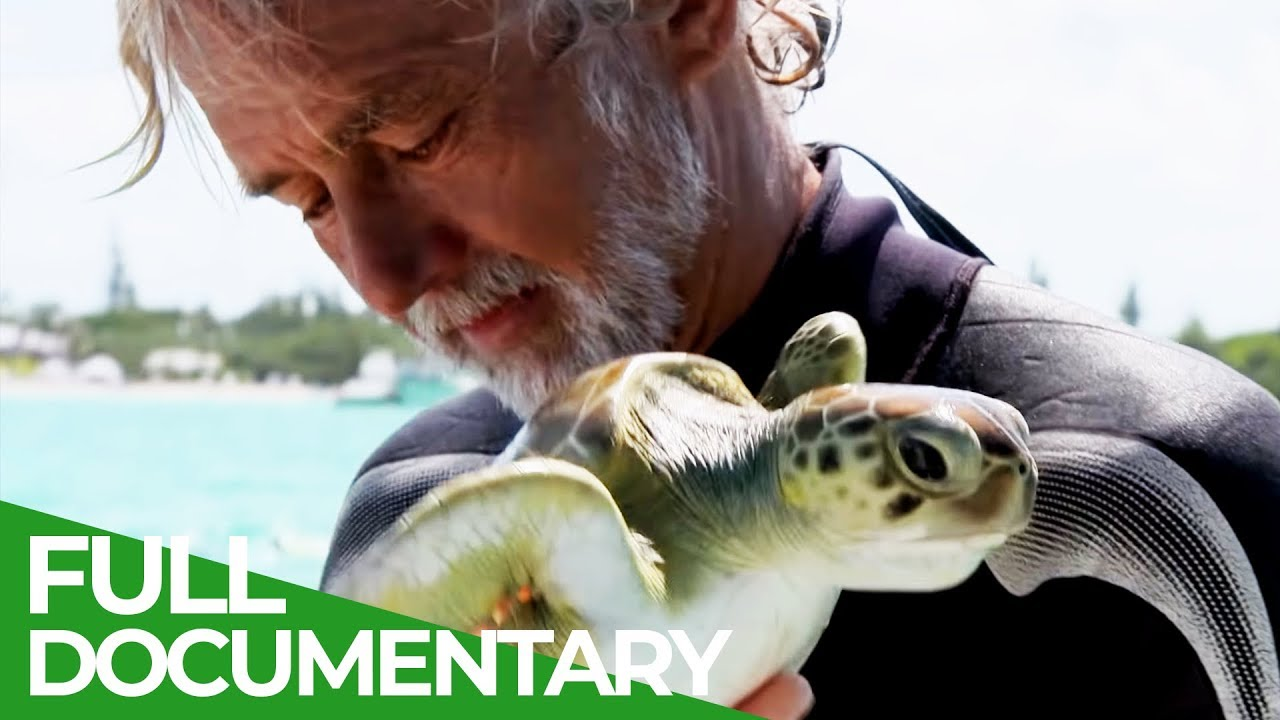 Bermudas Green Sea Turtles | Ocean Vet | S01 E05 | Free Documentary Nature