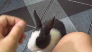 Baby rabbit training : 1st Day