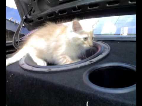 gatto sul subwoofer
