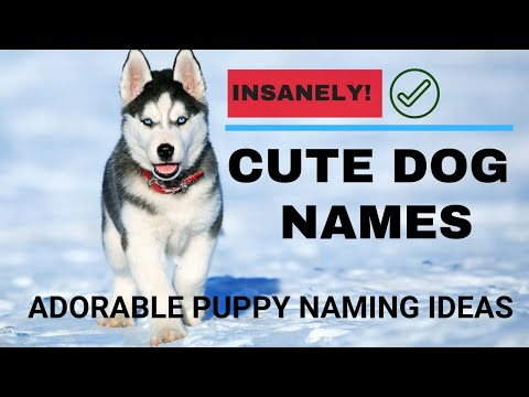 Cute And Adorable Male Dog Names | Pet Names
