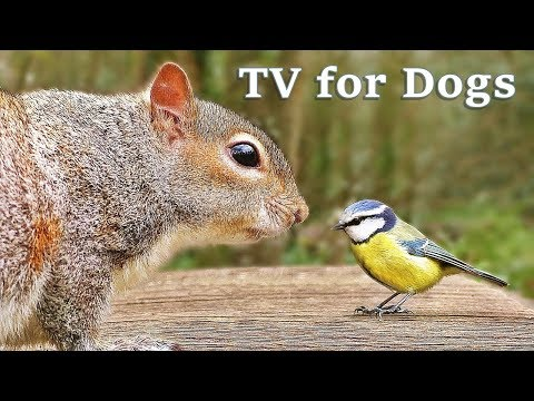 The Utimate Video for Dogs : TV for Dogs - Fun in The Forest ✅