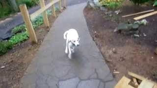 Hound Dog Recall