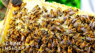 Why Bees Going Extinct Could Mean No More Ice Cream Or Avocados