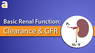 Basic Renal Function: Clearance and GFR