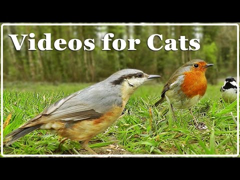Cat TV - Video for Cats - Birds Extravaganza : 7 Hours of TV for Cats with Beautiful Bird Sounds ✅