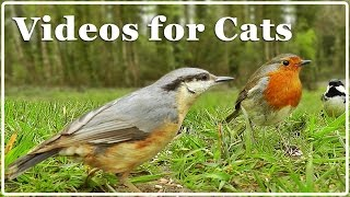 Download Cat TV - Video for Cats - Birds Extravaganza : 7 Hours of TV for Cats with Beautiful Bird Sounds ✅ Mp3 and Videos