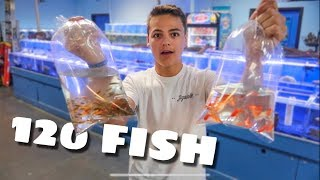 BUYING more COLORFUL FISH!!!