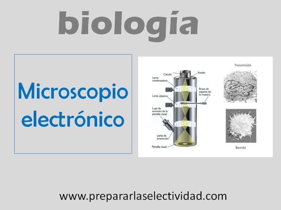 Microscopio electrnico  YouTube