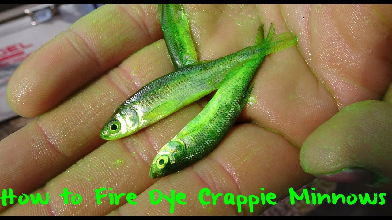 How To Fire Dye Crappie Minnows