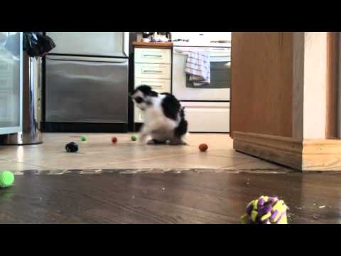 The Oreo Cat: Getting his groove on