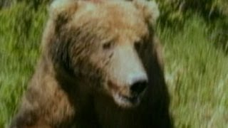 Hiker Photographs Grizzly Bear Just Before Deadly Attack